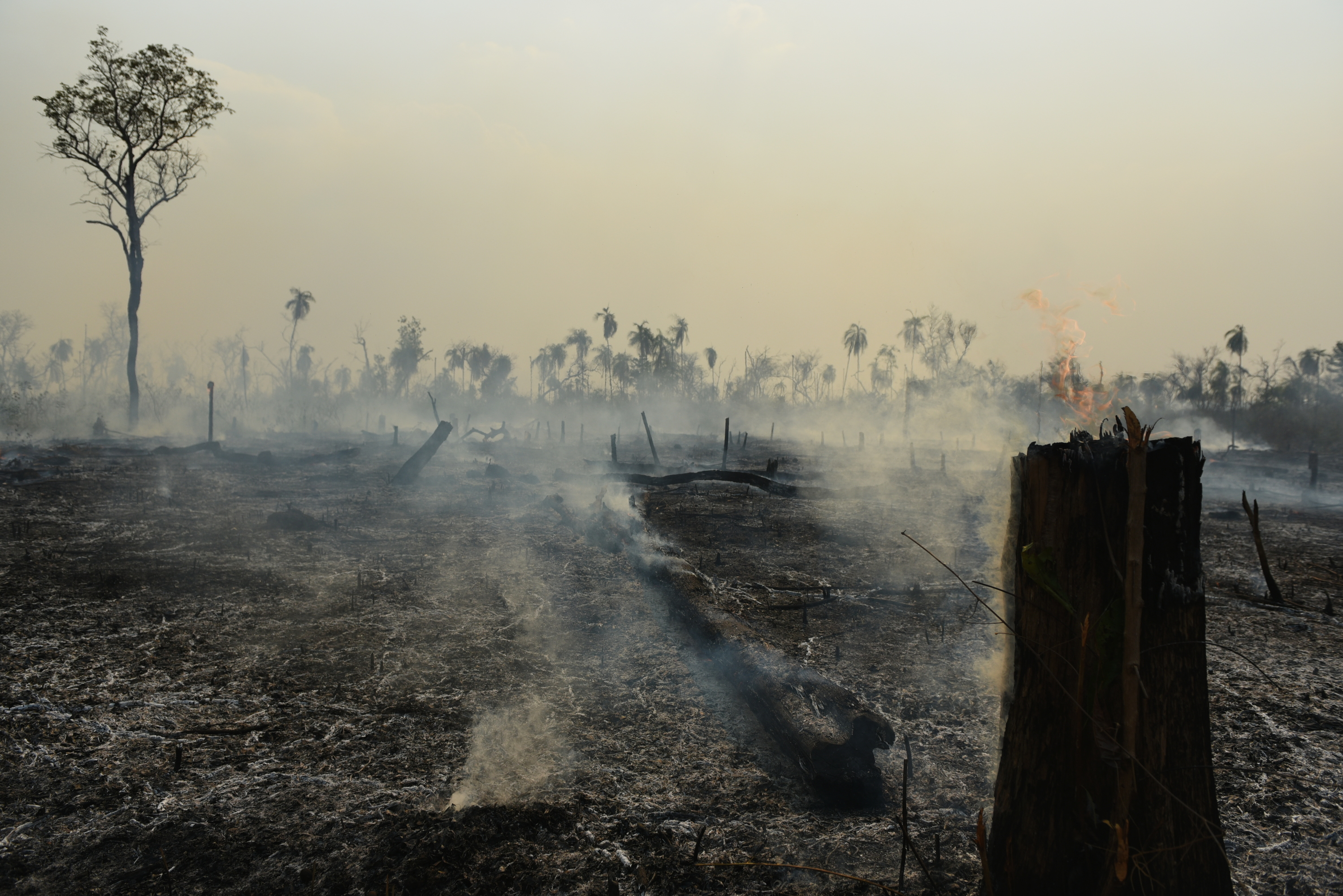 Smouldering stumps and ground following a rainforest wildfire in Porquinhos Indigenous Territory in Brazil's Maranhão state, in the south-eastern Amazon.